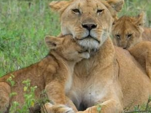 6 Days Amazing Safaris Photos