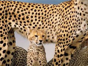 Superb Luxury Safari-Northen Circuit Photos