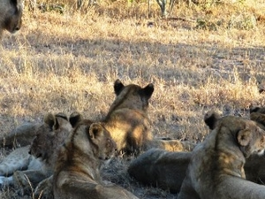 6 Days Serengeti Safaris