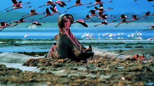 Lake Nakuru Safari Package Photos