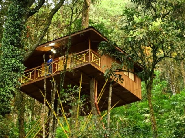 Munnar Tree House Photos