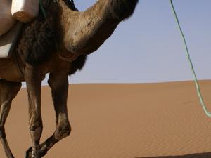 One Night Desert Tour Marrakech To Zagora Dunes Photos