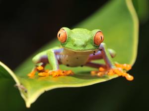 Costa Rica Explorer Fotos