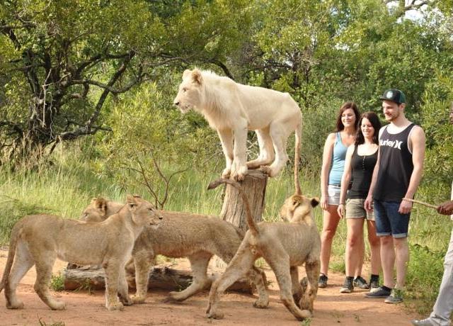 Rustenburg - Sun City to Ukutula Lion Park Day Tour Photos