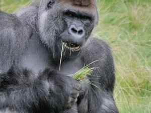 Rwanda Gorillas & Lake Kivu Tour Photos