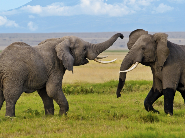 Lake Nakuru, Masai Mara, Amboseli & Tsavo West Safari Photos