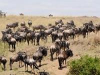 Masai Mara April Getaway
