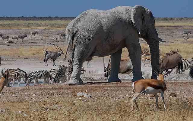 Best of Etosha Accommodated Safari Photos