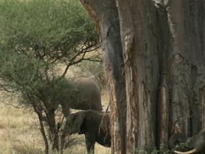 Tarangire Manyara Safari Photos