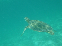 Snorkelling In Akumal