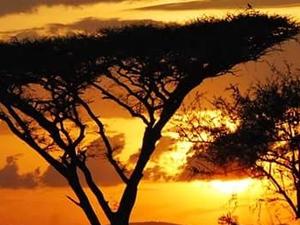 Safari Tour Package Photos
