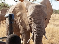 Lake Naivasha & Masai Mara Safari