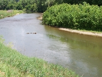 Kokosing River