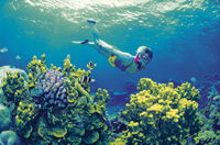 4-Day Cairns and Great Barrier Reef Tour Photos