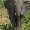 5-Day Victoria Falls and Chobe National Park Tour with Round-Trip Flight from Johannesburg