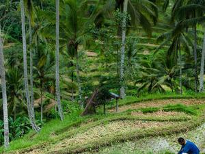 Bali Kintamani Volcano, Ubud and Barong Dance Full-Day Tour Photos