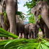 Chiang Mai Adventure: Elephant Camp, Zipline, Whitewater Rafting and Long-Neck Hill Tribe