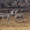 Hell's Gate National Park Walking Tour with Elsamere Conservation Park Visit from Nairobi