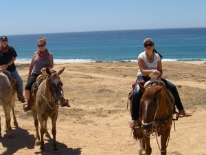 Los Cabos Shore Excursion: Horseback Riding Adventure Photos