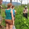 Opium Trail Trek Including Wat Phra That Doi Suthep and Hmong Village Tour