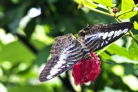 Private Penang Tour: Butterfly Farm and Penang Botanic Gardens Photos