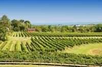 Private Tour: Niagara Falls Wineries  Photos