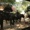 Elephant Ride and Jungle Trek Half-Day Tour from Pattaya