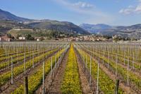 Valpolicella Day Trip from Venice: Wine Tasting and Verona Photos