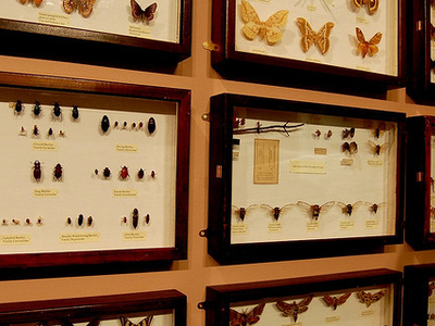 The Wall Of Insects