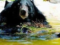 Intangki Wildlife Sanctuary