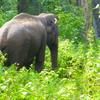 Wildlife & Tea Tasting Trail To Nilgiris