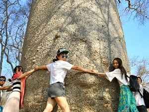 Baobab And Tsingy - Madagascar Fotos