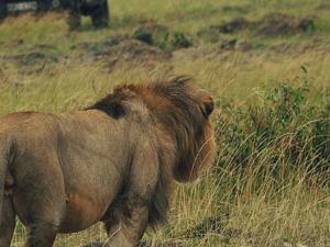 Maasai Mara Explorer Photos