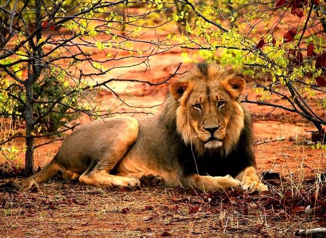 Buffalo Ridge Safari Lodge, Madikwe Game Reserve Photos