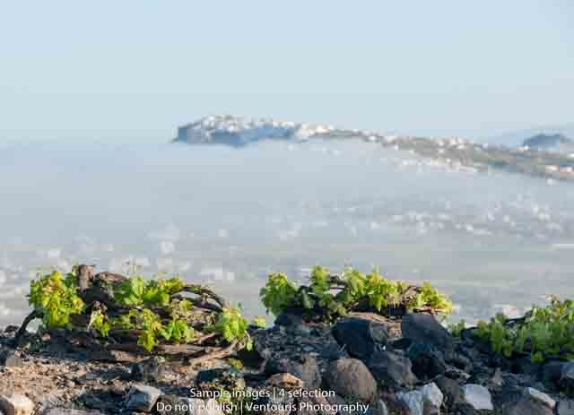 Santorini Wine Roads Photos