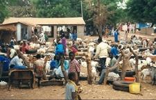 Market In Abuko
