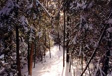 Bruce Trail Narrow