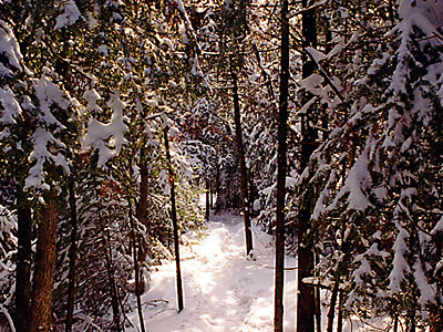 Bruce Trail Narrow