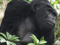 10 - Day Discover Mothers Nature Game Drive, Gorilla Safari