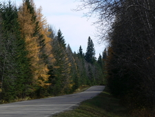 Mixed Forest Alongside Roadway