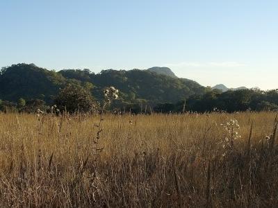 Farpak Grassland
