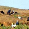 Birds Near Lake In Karera Bird Sanctuary