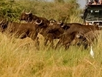 Hope Tours & Safaris Africa - Entebbe