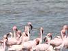 Flamingo Crater
