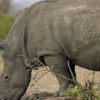 Gorilla tour in Uganda and wildlife for 10 days 2014