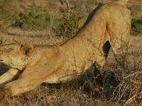 Fly To Masai Mara From Malindi