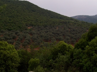 Ajlun Mountains
