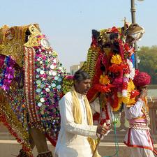Camel Festival Steve Hoge 1 1