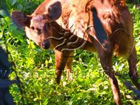 Deer In Kaziranga National Park
