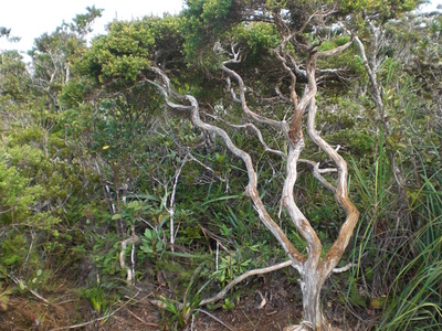 A Tree Growing In The Dwarf Forest Of Mount Hamiguitan